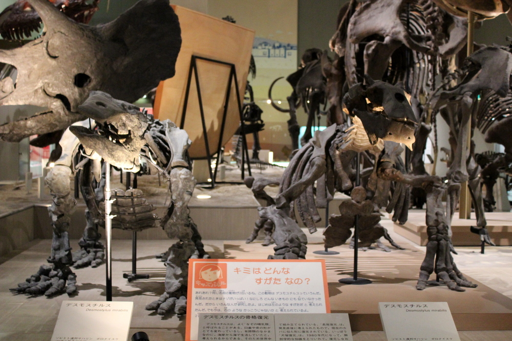 http://pangea-note.com/museum/blogimg/1-IMG_9138.JPG