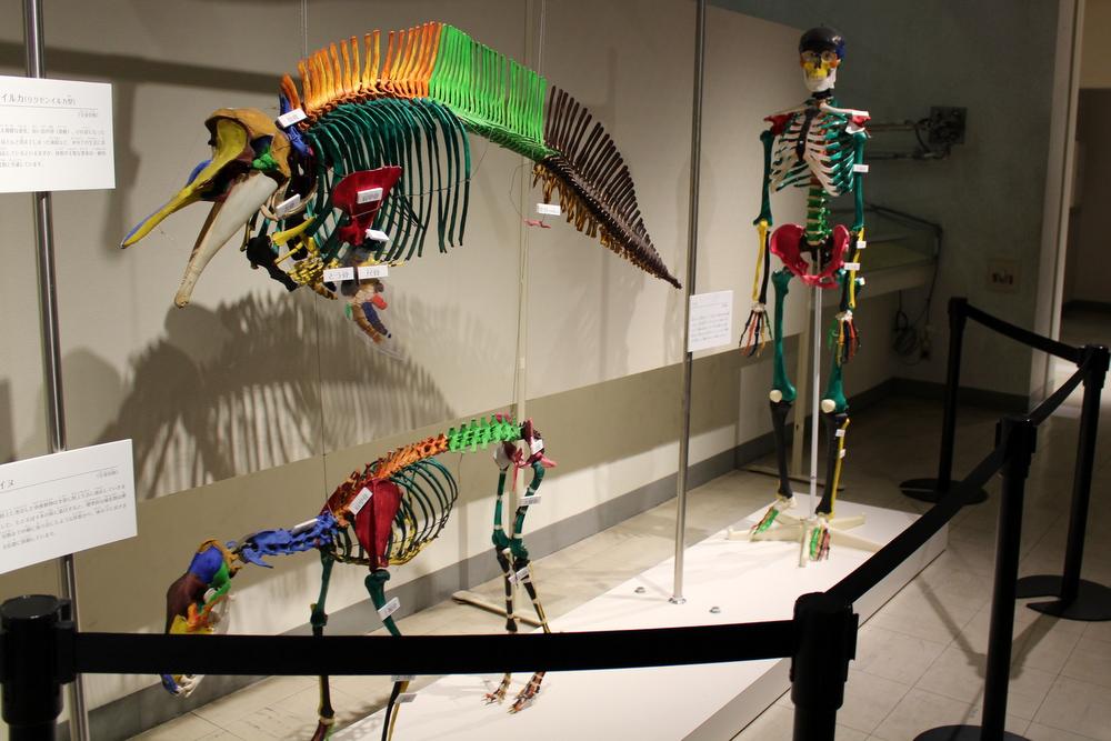 http://pangea-note.com/museum/blogimg/1-IMG_9139.JPG