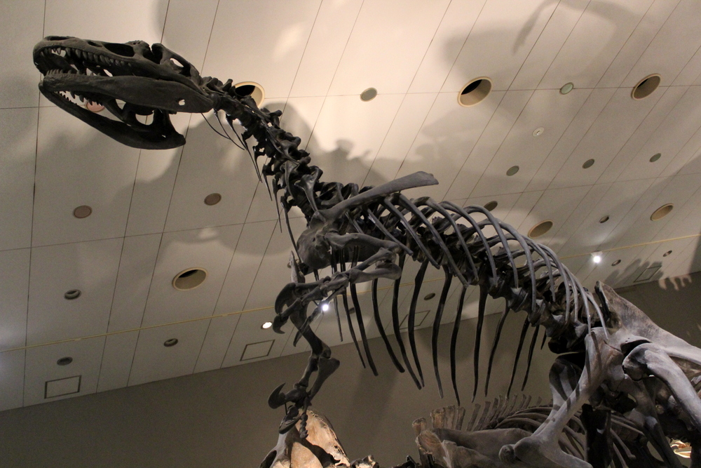 http://pangea-note.com/museum/blogimg/1-IMG_9145.JPG