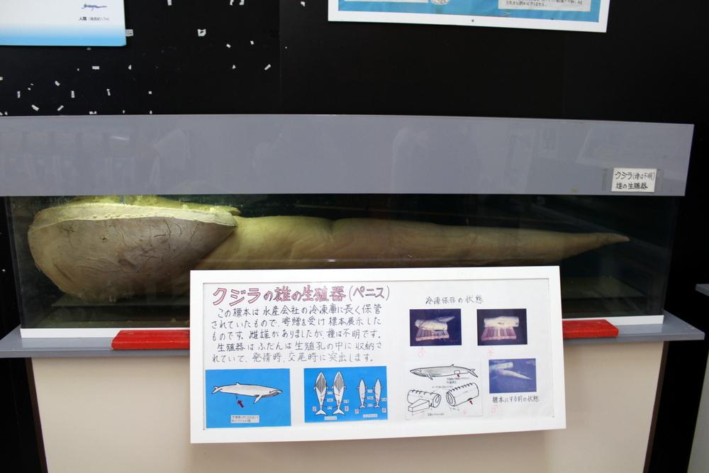 http://pangea-note.com/museum/blogimg/1-IMG_9678.JPG