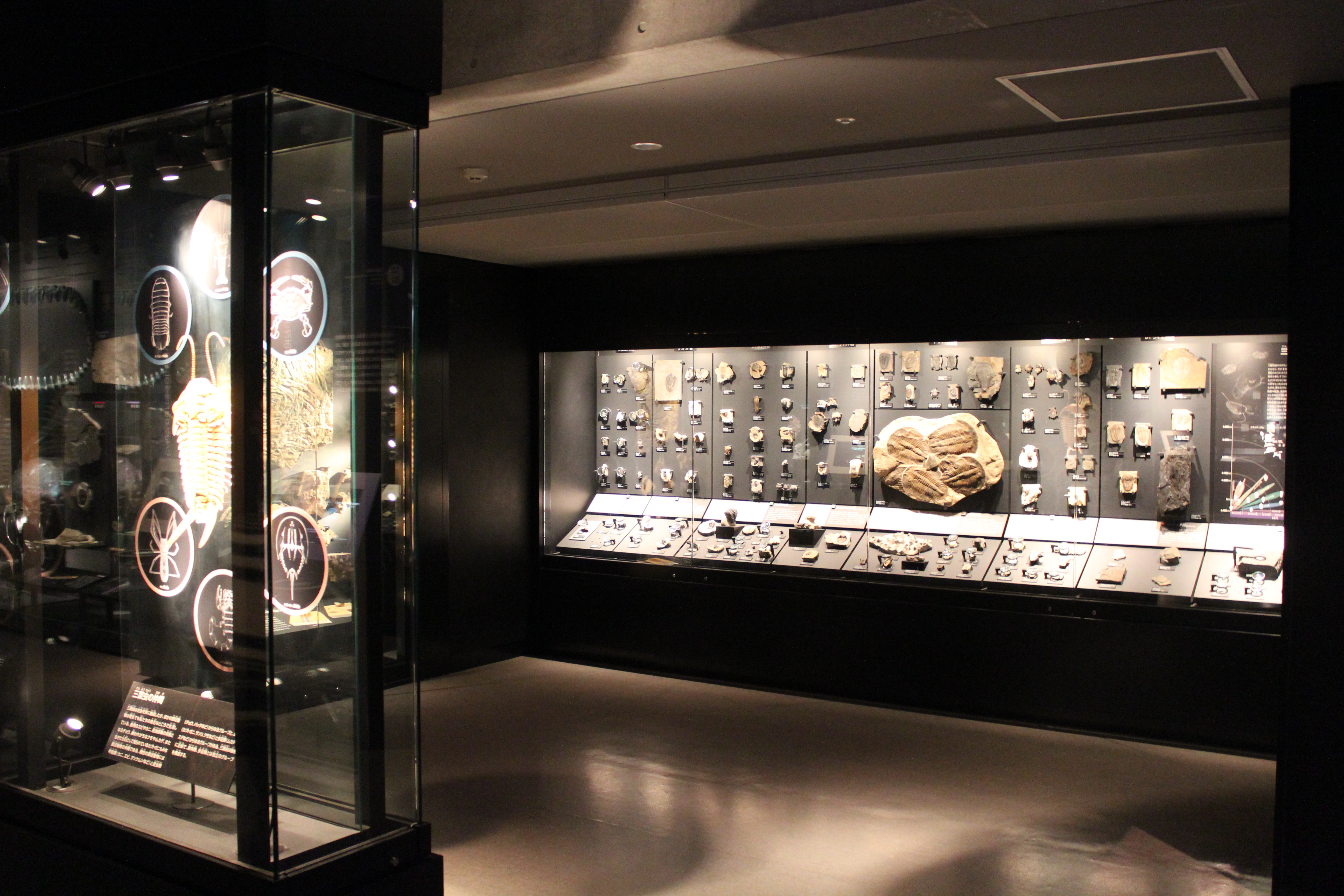 http://pangea-note.com/museum/blogimg/IMG_0470.JPG