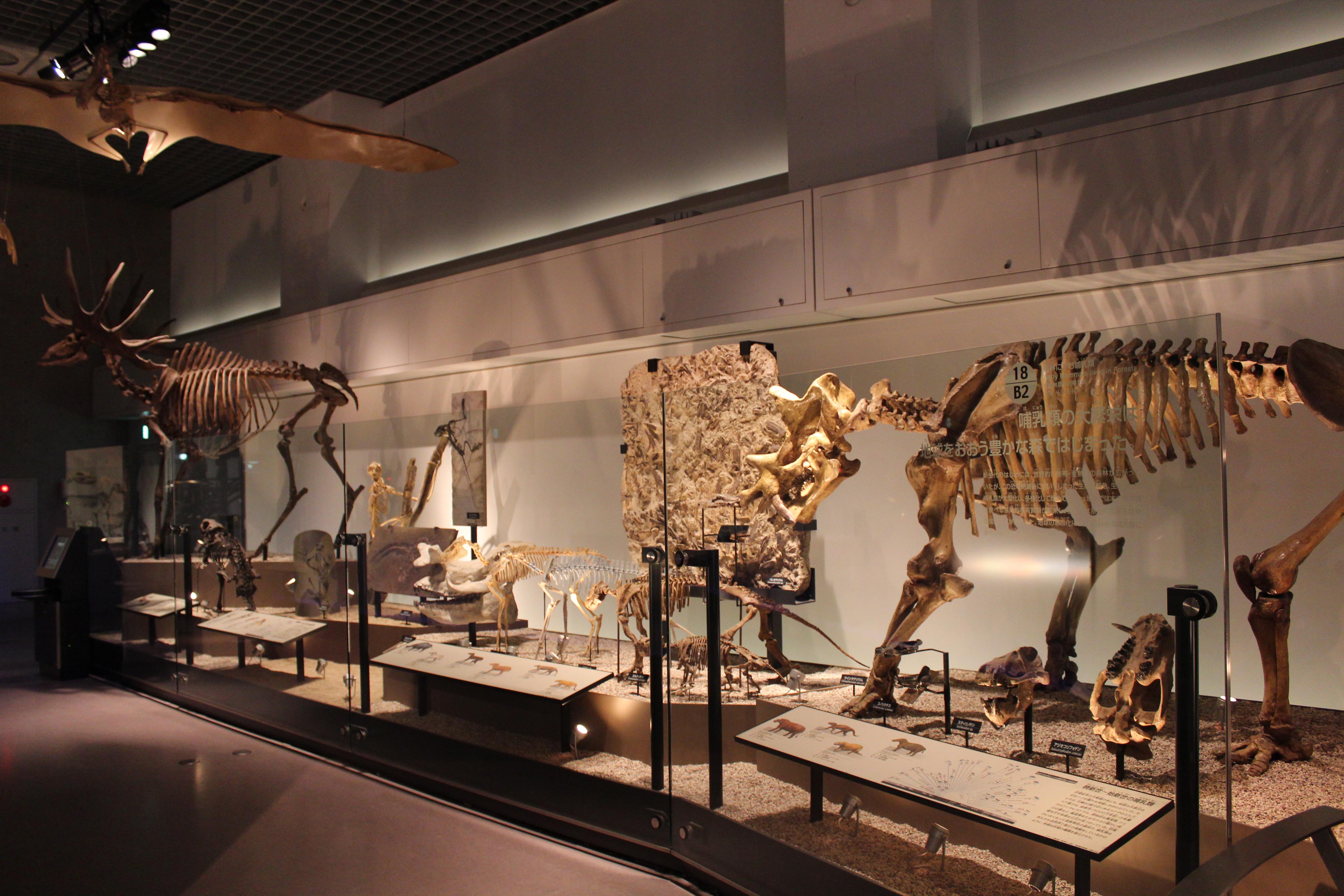 http://pangea-note.com/museum/blogimg/IMG_0520.JPG