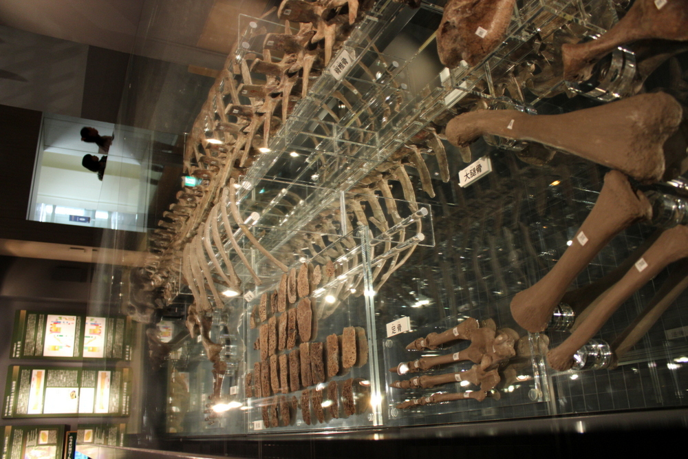 http://pangea-note.com/museum/blogimg/IMG_1078.JPG