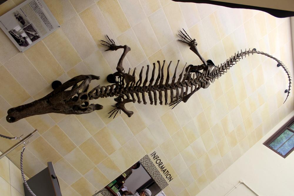 http://pangea-note.com/museum/blogimg/IMG_3646.JPG